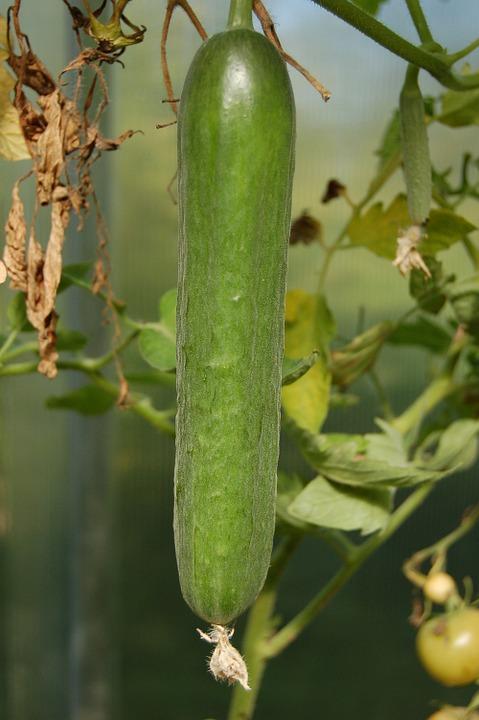 Het is komkommertijd